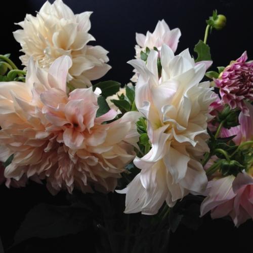 Fleurs_devorezmoi_01