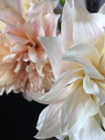 Fleurs_devorezmoi_06