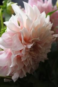 Fleurs_devorezmoi_08
