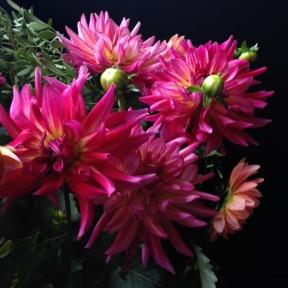 Fleurs_devorezmoi_09